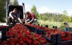 Elbistan Unlu Mamüller Ekmek Üreten Fırıncılar Derneği Başkanı Abdulkadir Dedeler