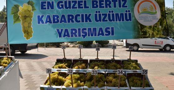BERTİZ'İN EN KALİTELİ ÜZÜMÜ BELLİ OLDU