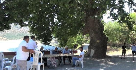 KAHRAMANMARAŞ'TA  DOĞU ÇINARI  KORUMA ALTINA ALINDI