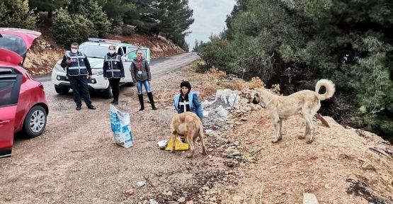 POLİS EKİPLERİ SOKAK HAYVANLARI İÇİN GÖREVE ÇIKTI